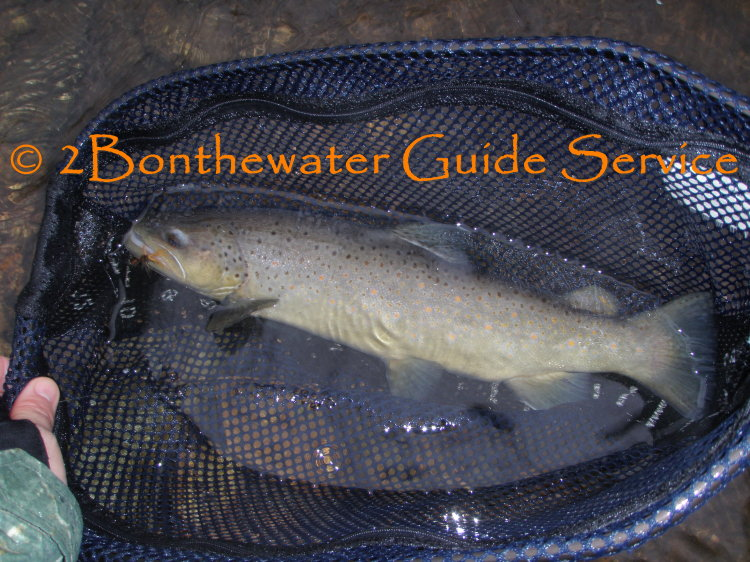 stocked brown trout, fly fishing, crawfish, crayfish, fall trout fishing