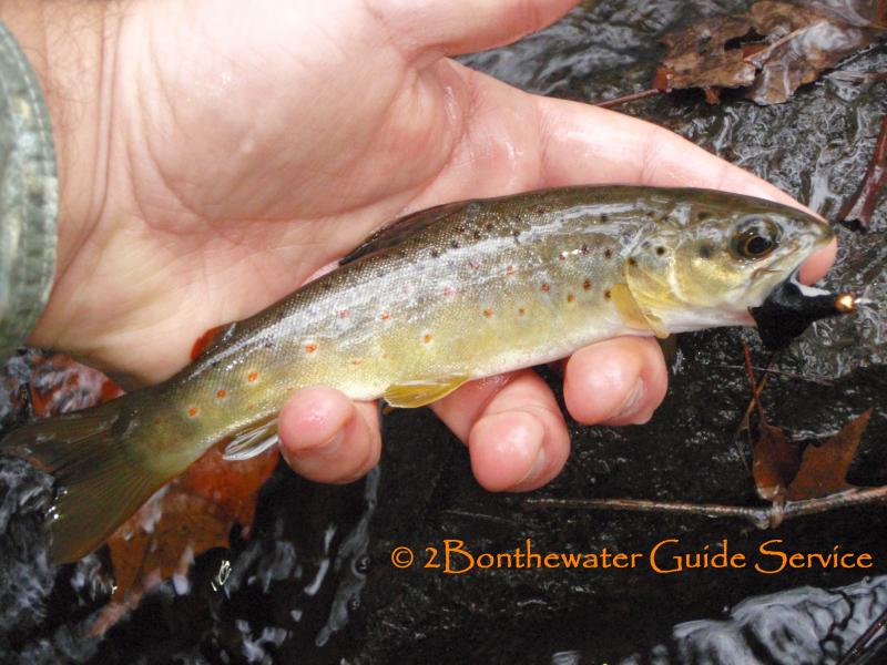 2Bonthewater Guide Service - Reports December 7, 2013 I ...