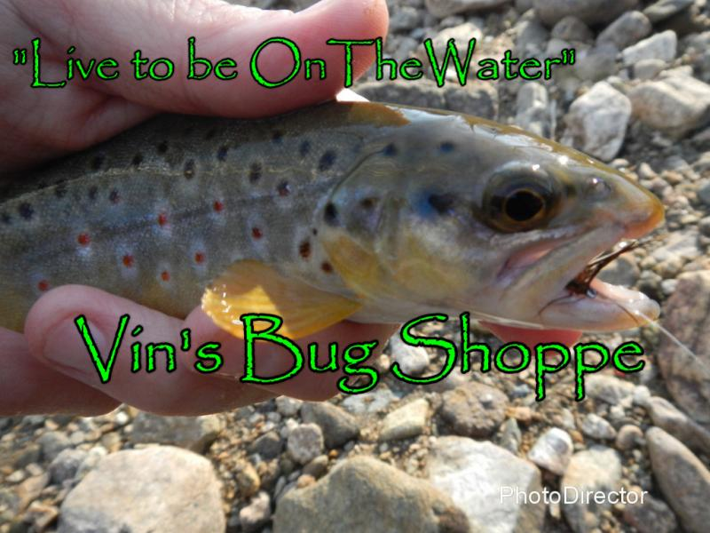 wild brown trout, fly fishing, PA fly fishing, Hendrickson, Quill Gordon