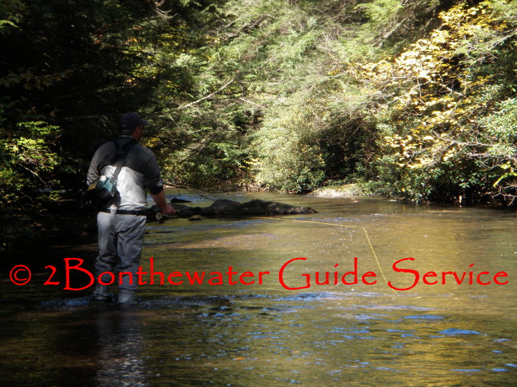 Schuylkill County, wild trout fishing, fly fishing, brook trout, brown trout