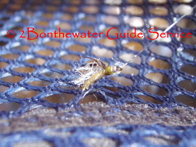 fly pattern, emerger pattern, cdc, wild trout, fly fishing,