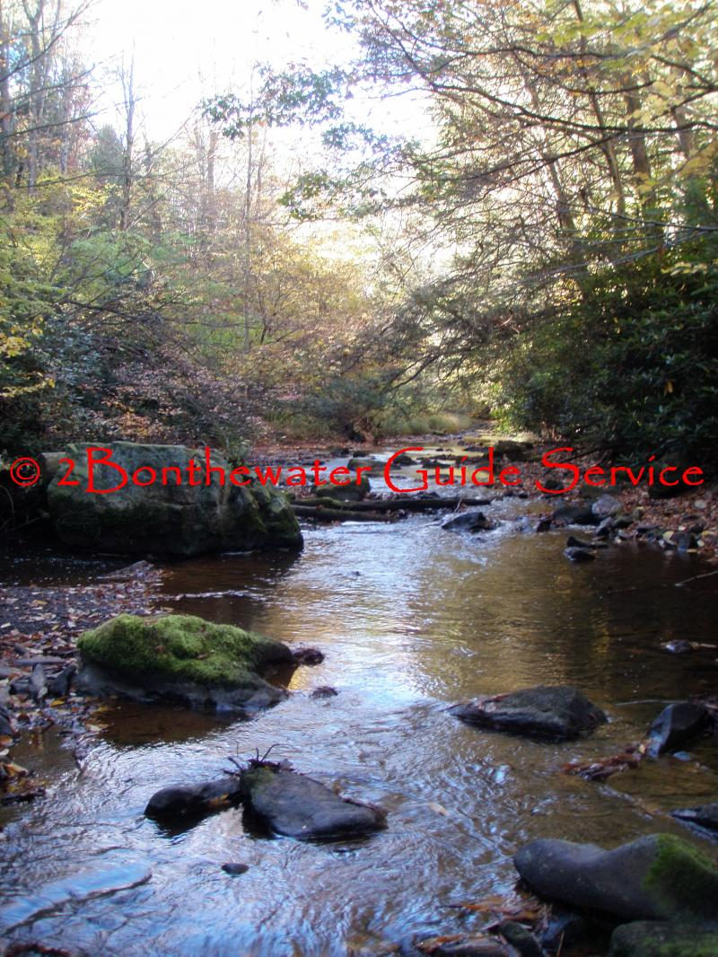 wild trout fishing, wild brook trout fishing, Fly Fishing, Dry Fly fishing
