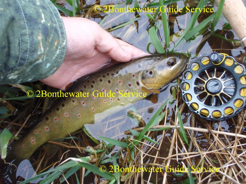 Oswego County Today >> 2Bonthewater Guide Service - Reports December 22, 2010 Fished Antietam Lake again. Theentire ...