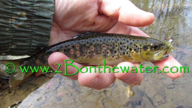 micro jig, fly fishing, wild brown trout,