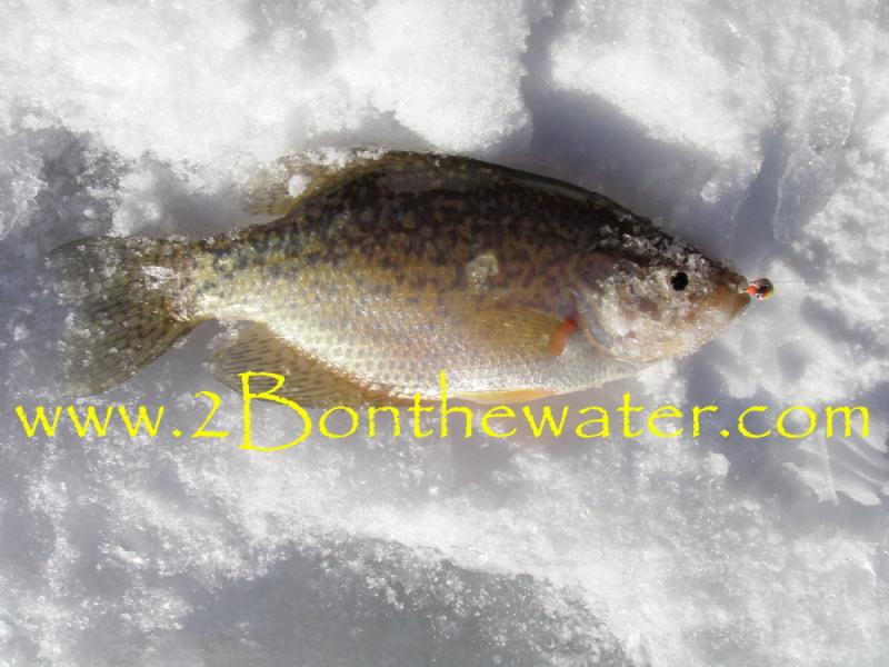 2bonthewater Guide Service 2015 Fishing Reports Page December 02 2015 It Is Finally Feeling Like Winter Yes You Can Still Wet A Line And